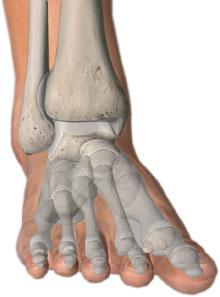 articoloazione - dolore della caviglia